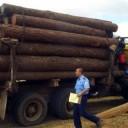 Interpol detuvo a 200 traficantes de madera en Latinoamérica